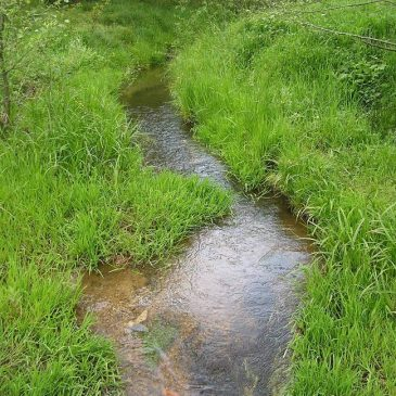 Dolina Gozdnicy w Lubaniu