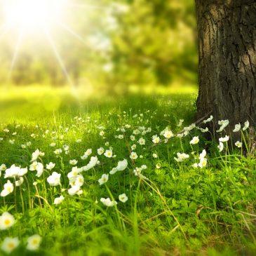 Program Lubańskiej Wiosny Ekologicznej 2016