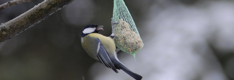 Dlaczego dokarmiamy ptaki