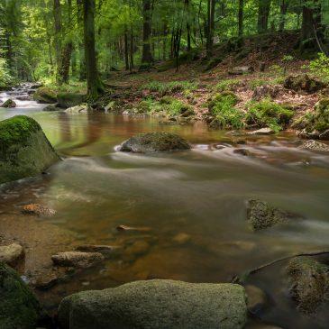 """Konkurs wiedzy o bioregionie pt. """"Doliną rzeki Kwisy – z biegiem rzeki od gór w doliny""""."""