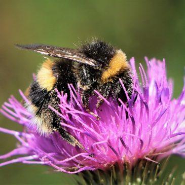 """Konkurs wiedzy przyrodniczej pt. """"Pszczoły, pszczolinki, trzmiele i inne owady zapylające""""."""