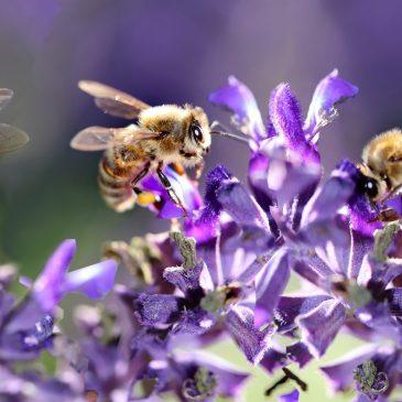 """Konkurs plastyczny pt. """"Rośliny przyjazne pszczołom i innym owadom zapylającym""""."""