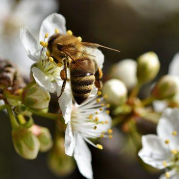 Gmina przyjazna pszczołom.