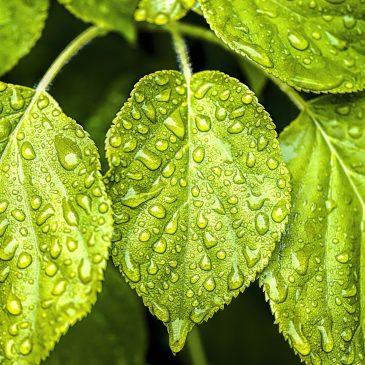 Woda z nieba – recykling wody deszczowej i roztopowej.