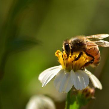 """Konkurs ochrony przyrody pn. """"Pomagamy pszczołom"""""""