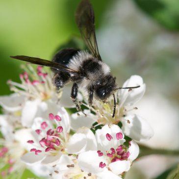 """Konkurs wiedzy przyrodniczej pt. """"Rośliny przyjazne pszczołom i innym owadom zapylającym""""."""